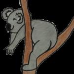 wunsch-koala
